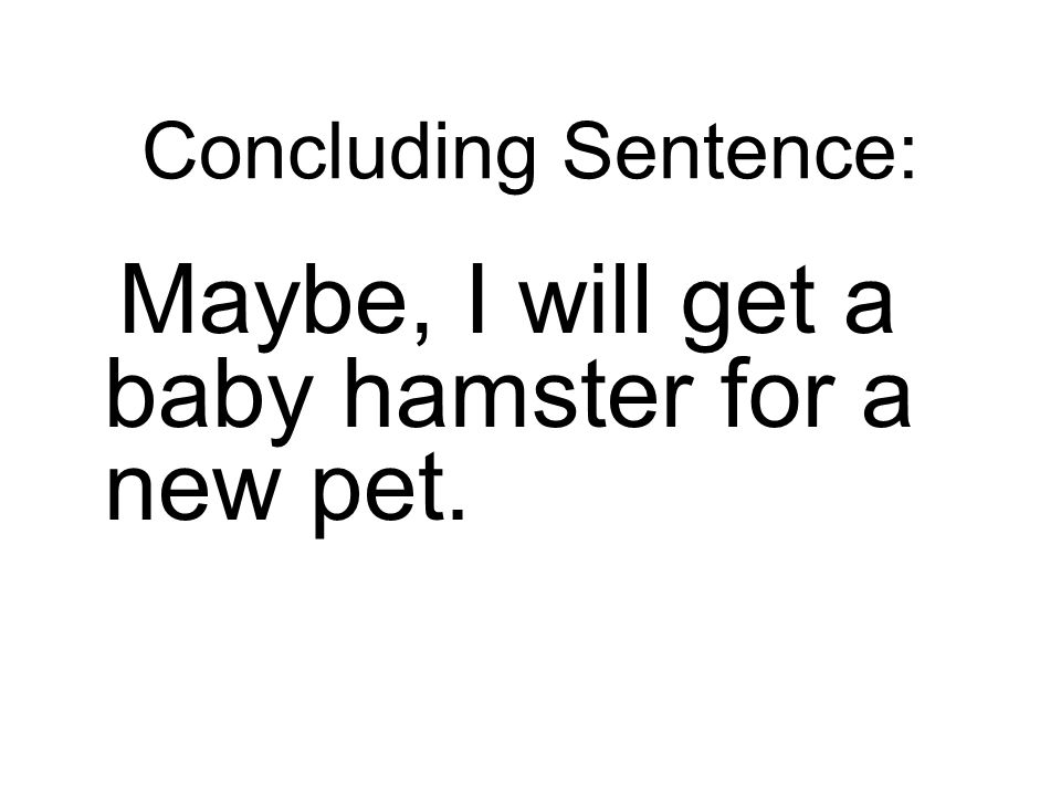 Maybe, I will get a baby hamster for a new pet.
