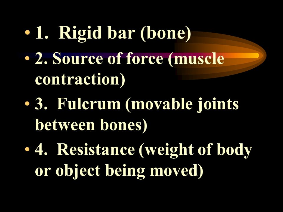 1. Rigid bar (bone) 2. Source of force (muscle contraction)