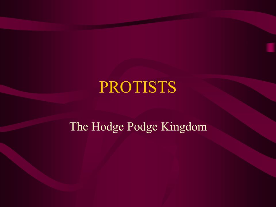 The Hodge Podge Kingdom