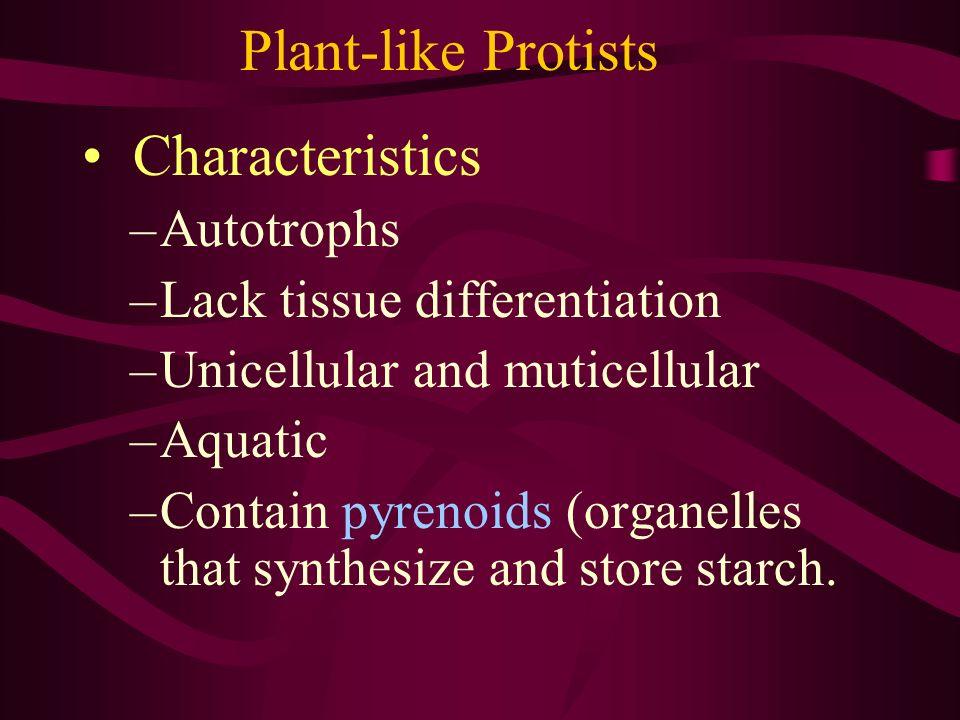 Plant-like Protists Characteristics Autotrophs