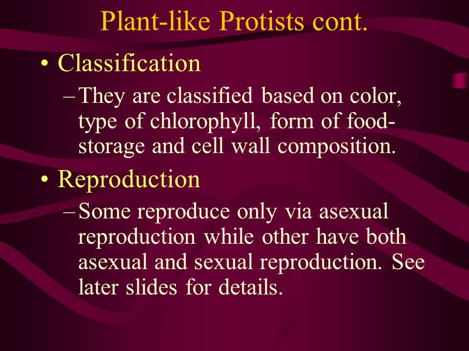 Plant-like Protists cont.