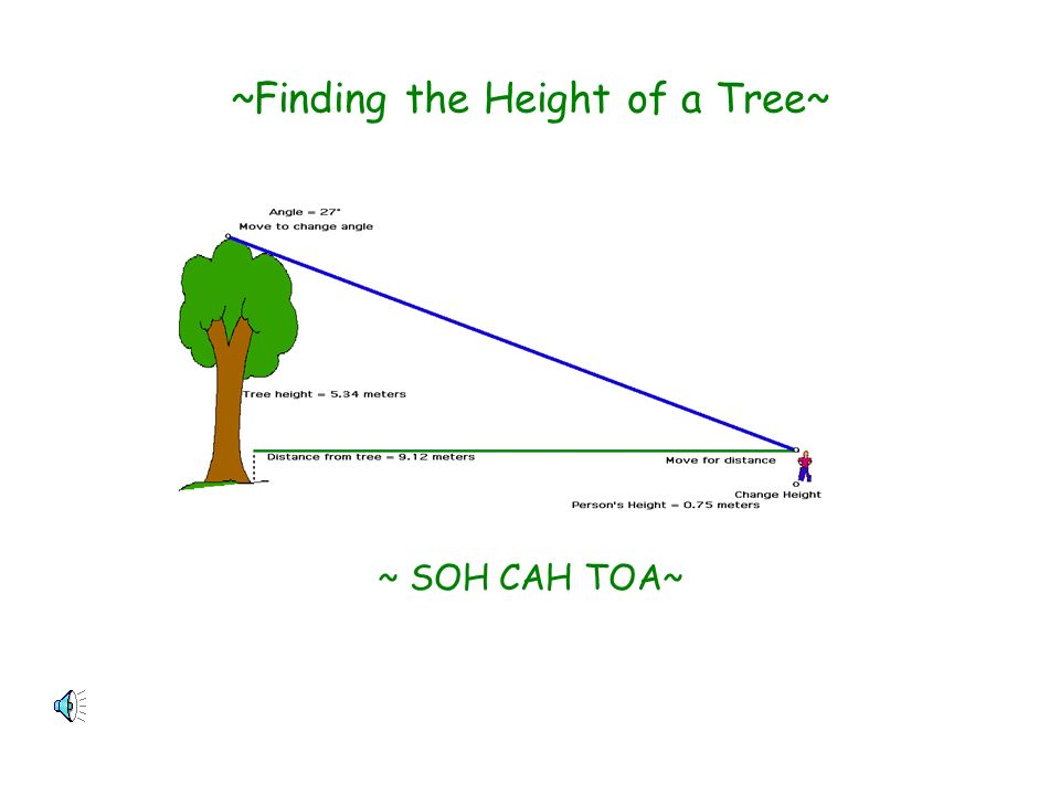 ~Finding the Height of a Tree~