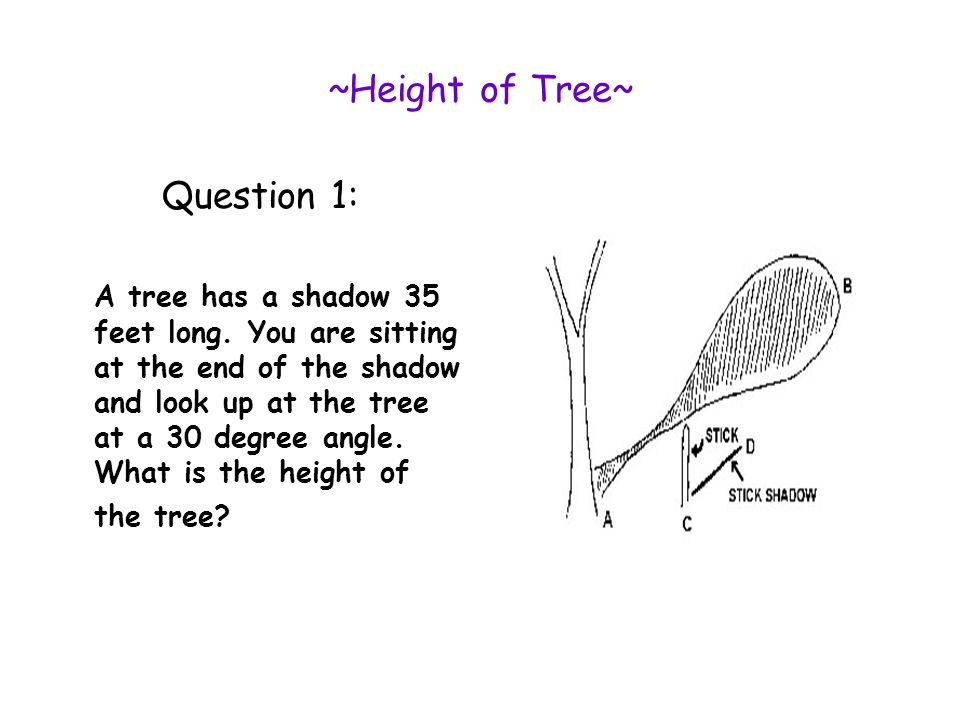 ~Height of Tree~ Question 1: