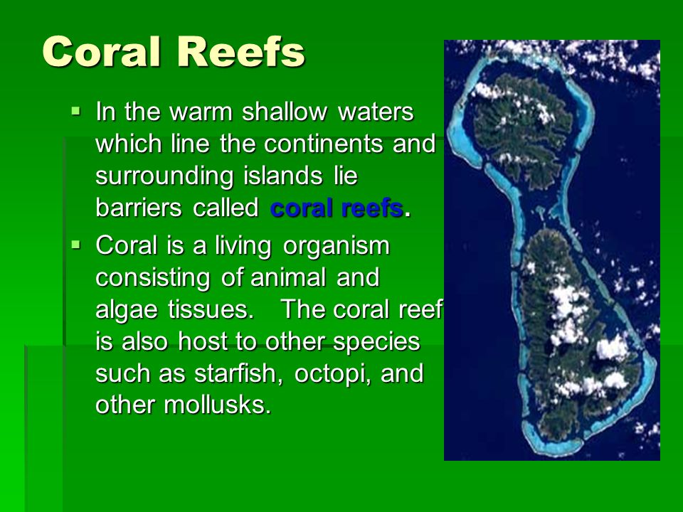 Coral Reefs In the warm shallow waters which line the continents and surrounding islands lie barriers called coral reefs.
