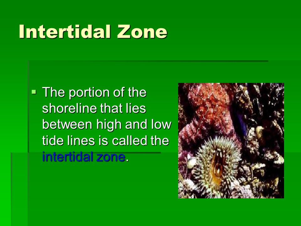 Intertidal Zone The portion of the shoreline that lies between high and low tide lines is called the intertidal zone.