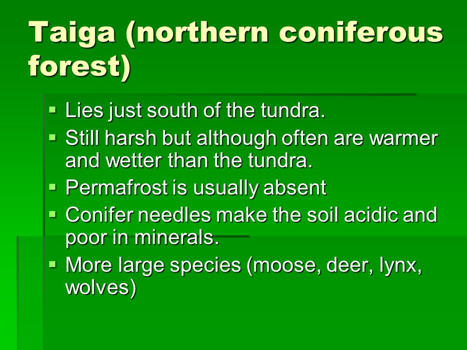 Taiga (northern coniferous forest)