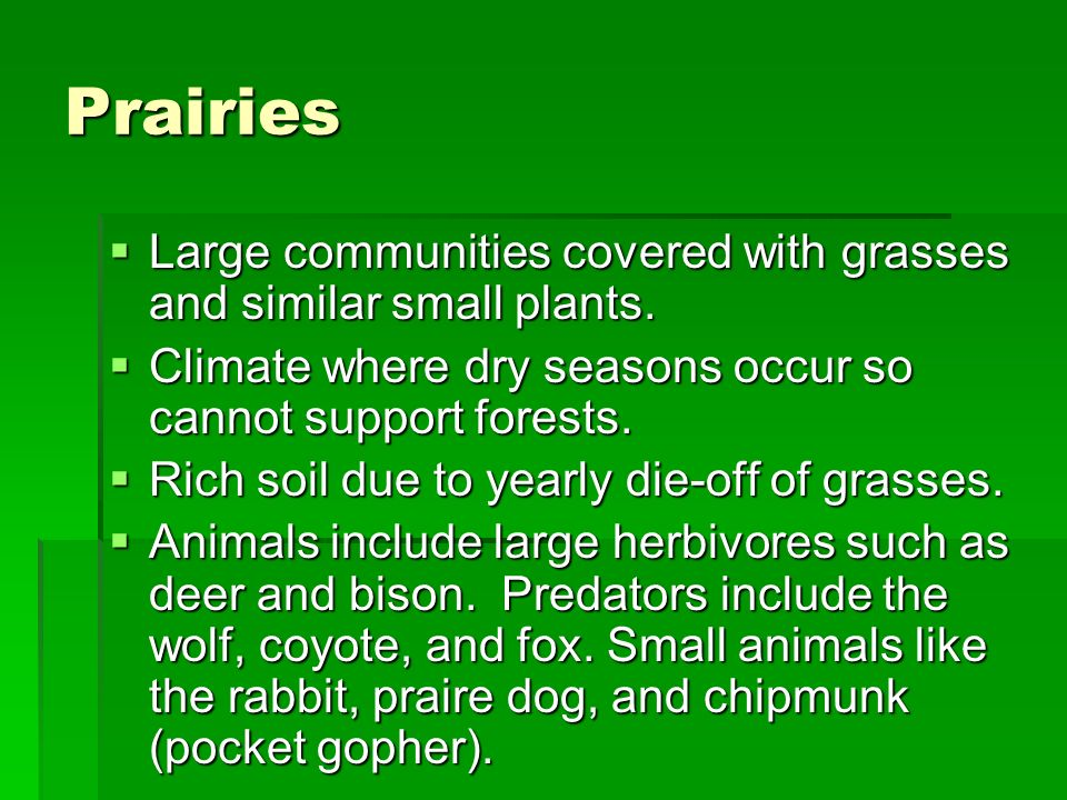 Prairies Large communities covered with grasses and similar small plants. Climate where dry seasons occur so cannot support forests.