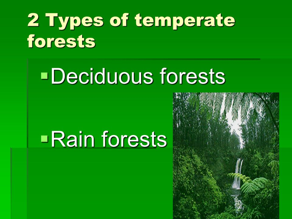 2 Types of temperate forests