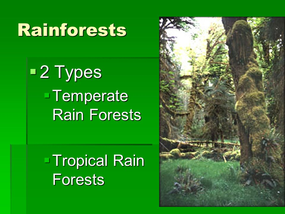 Rainforests 2 Types Temperate Rain Forests Tropical Rain Forests