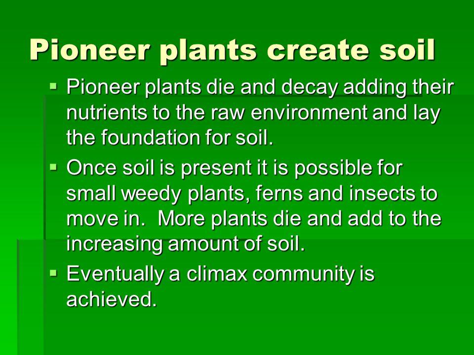 Pioneer plants create soil