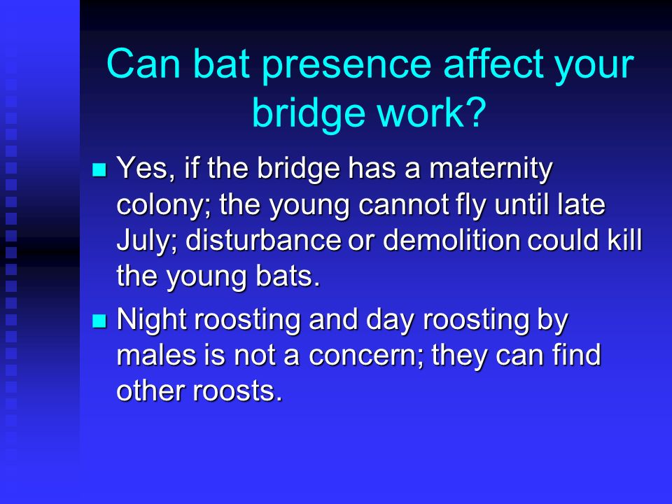 Can bat presence affect your bridge work