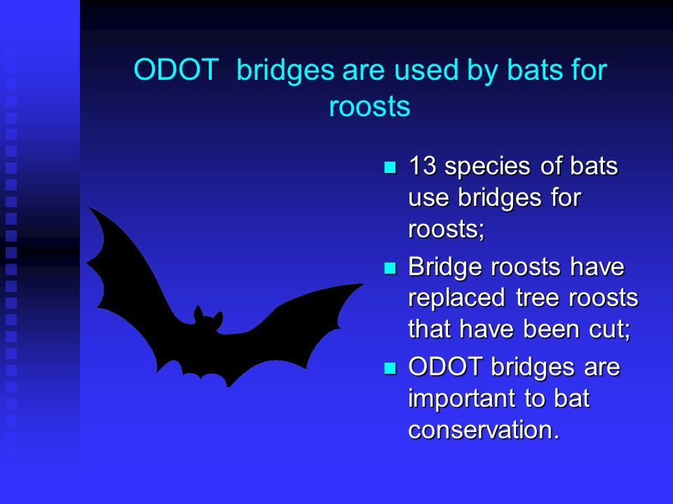 ODOT bridges are used by bats for roosts