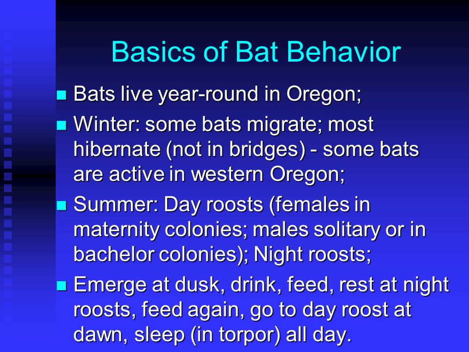 Basics of Bat Behavior Bats live year-round in Oregon;