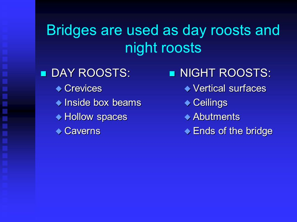 Bridges are used as day roosts and night roosts