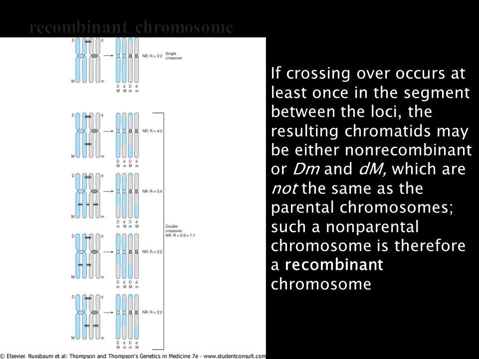 recombinant chromosome