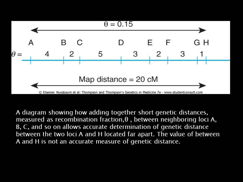 A diagram showing how adding together short genetic distances, measured as recombination fraction,θ , between neighboring loci A, B, C, and so on allows accurate determination of genetic distance between the two loci A and H located far apart.