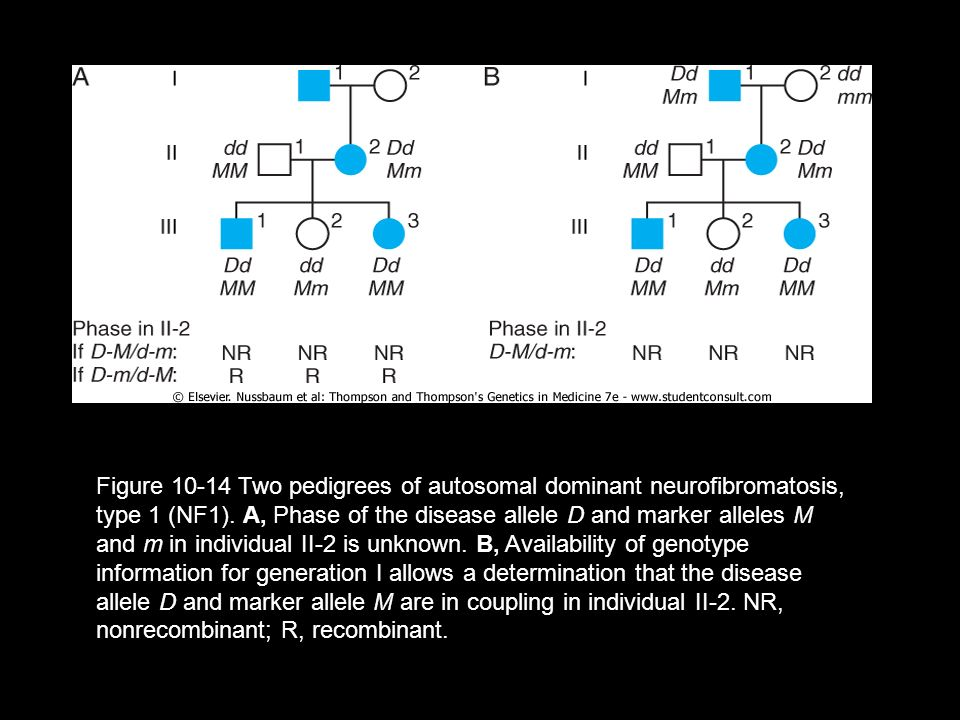 Figure 10-14 Two pedigrees of autosomal dominant neurofibromatosis, type 1 (NF1).