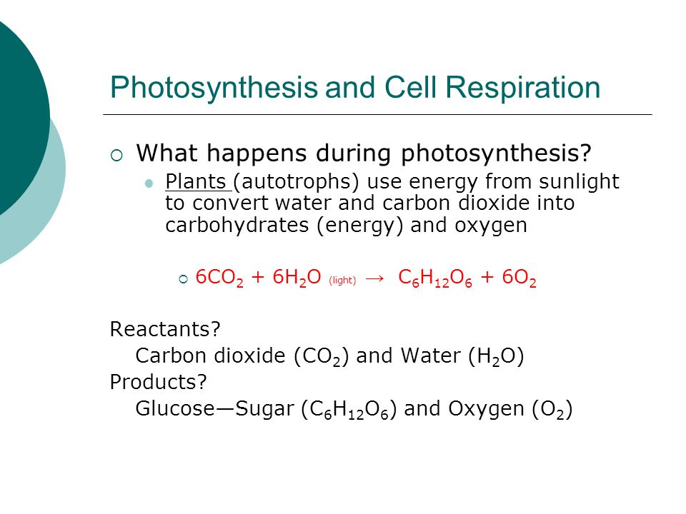 How does the plant obtain co2 during photosynthesis?
