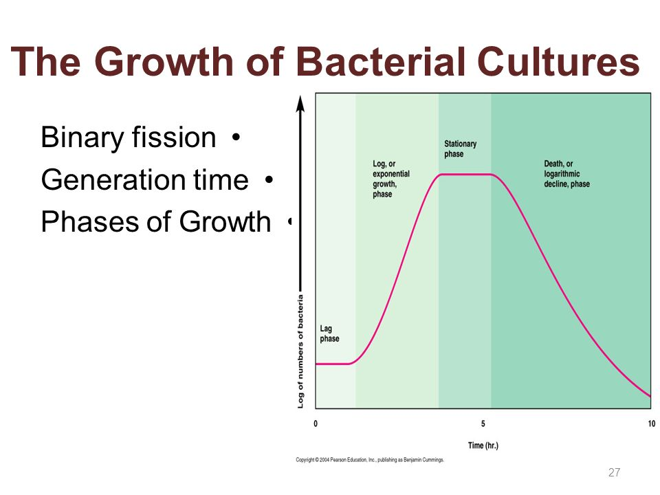 ultraviolet exposure and bacterial growth essay The exposure of germicidal ultraviolet is the product of time and intensity high intensities for a short period and low intensities for a long period are fundamentally equal in lethal action on bacteria.