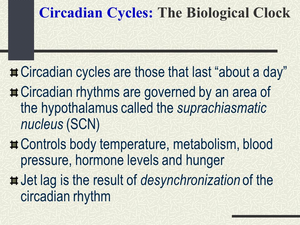 Circadian Cycles: The Biological Clock