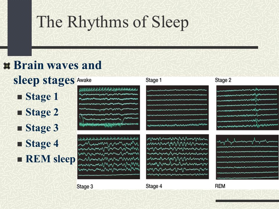 The Rhythms of Sleep Brain waves and sleep stages Stage 1 Stage 2