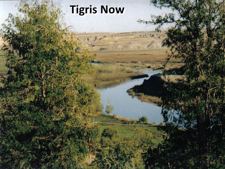 Tigris Now