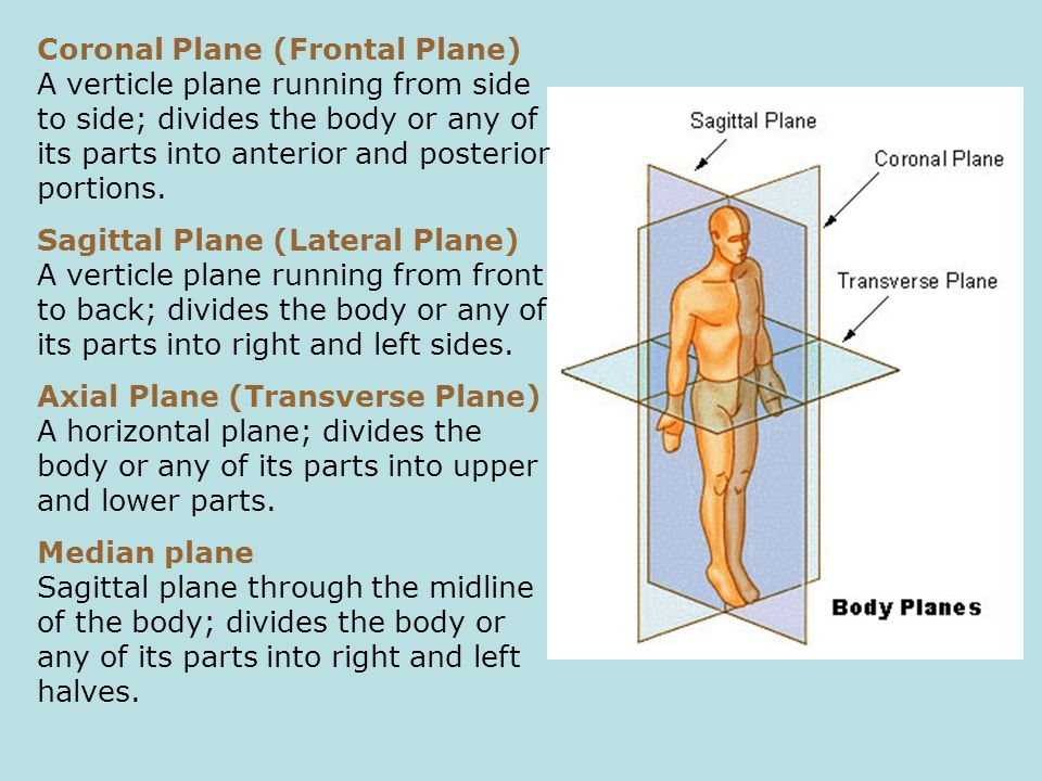 Coronal Plane (Frontal Plane) A verticle plane running from side to side; divides the body or any of its parts into anterior and posterior portions.