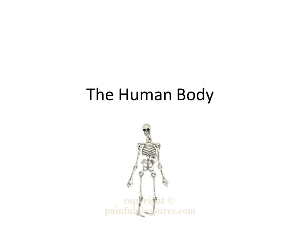 The Human Body Chapter ppt video online download
