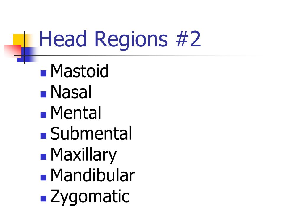 Head Regions #2 Mastoid Nasal Mental Submental Maxillary Mandibular