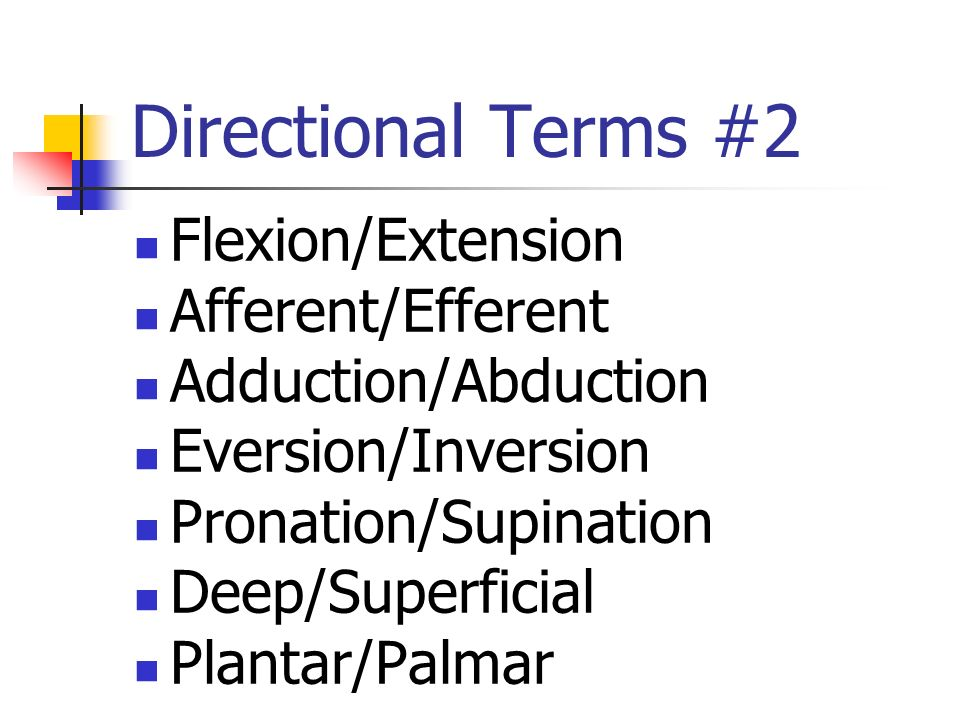 Directional Terms #2 Flexion/Extension Afferent/Efferent