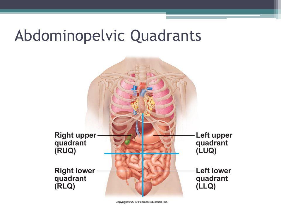 Abdominopelvic quadrants