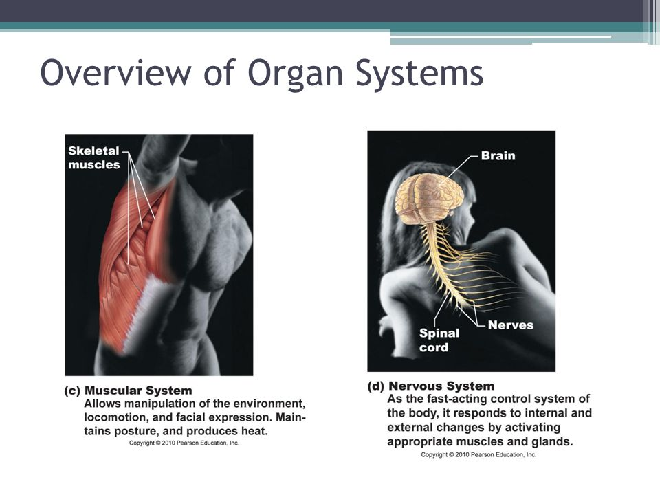 Overview of Organ Systems