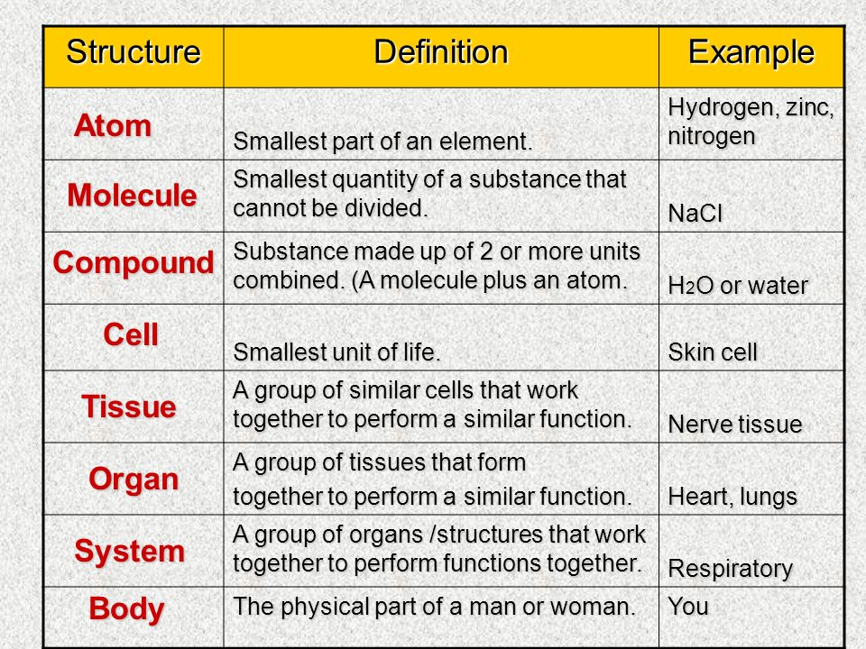 Organization Of The Human Body - Ppt Video Online Download