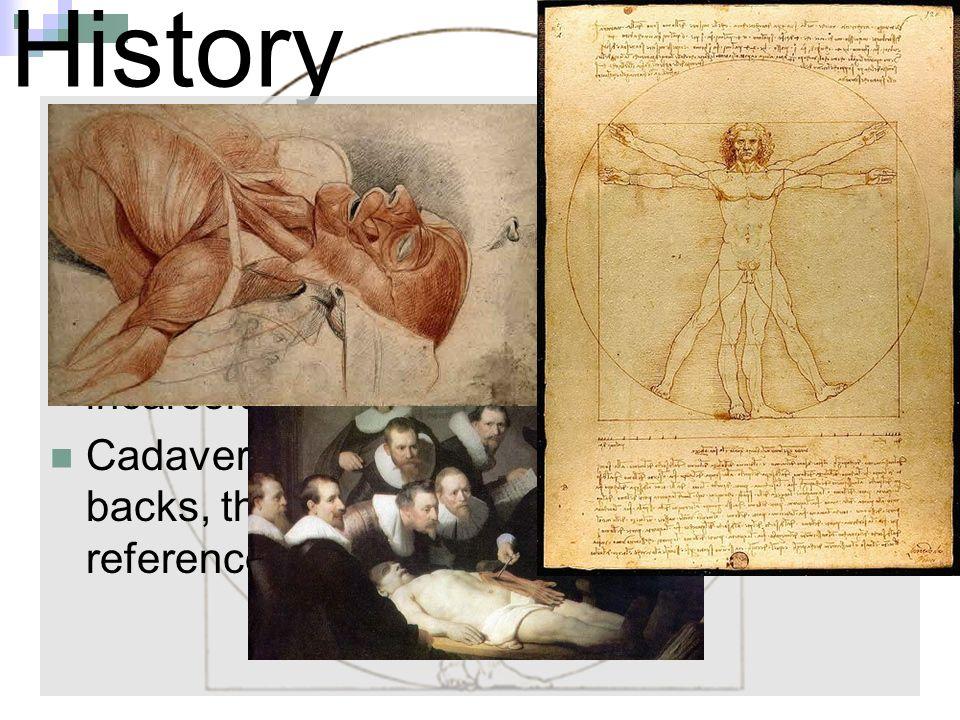 Tolle Anatomie Während Der Renaissance Galerie - Anatomie Von ...