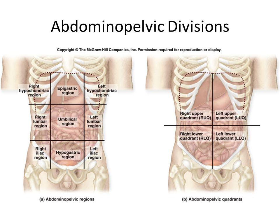 anatomy quiz 1 dr brasington ppt video online download