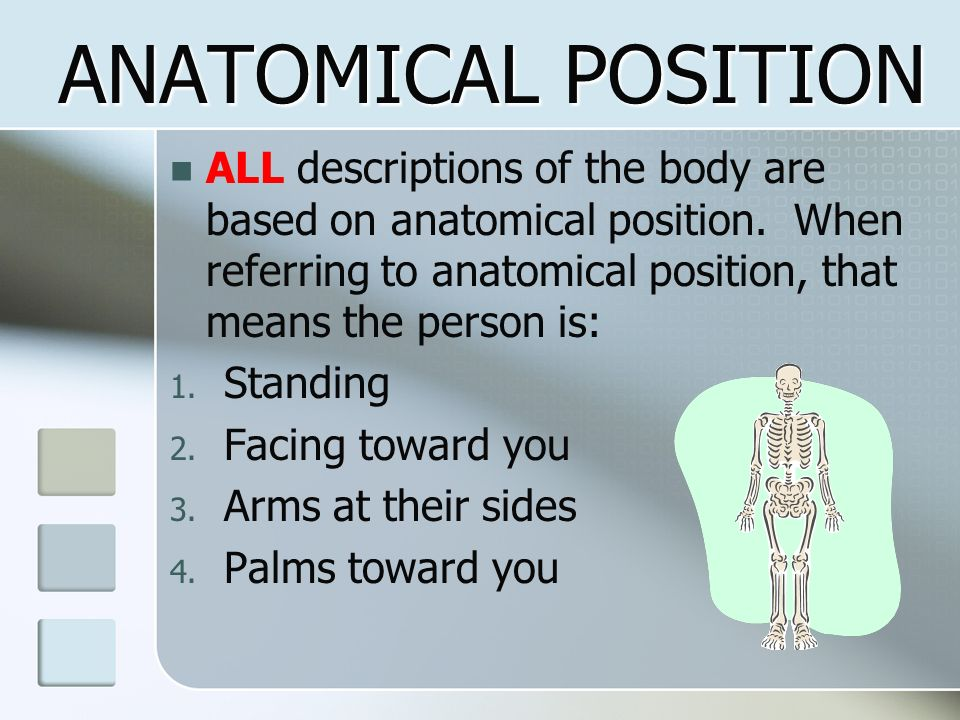 ANATOMICAL POSITION ALL descriptions of the body are based on anatomical position. When referring to anatomical position, that means the person is: