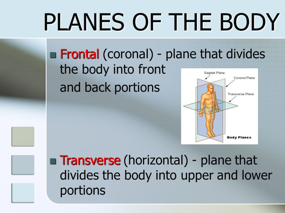 PLANES OF THE BODY Frontal (coronal) - plane that divides the body into front. and back portions.