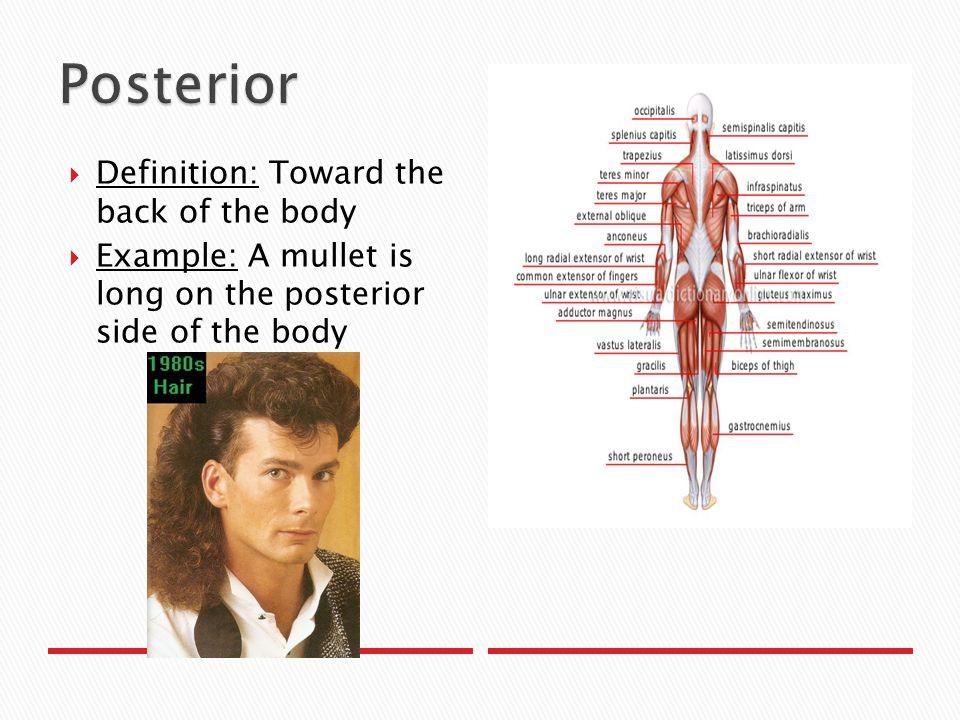 Dorsal anatomy definition