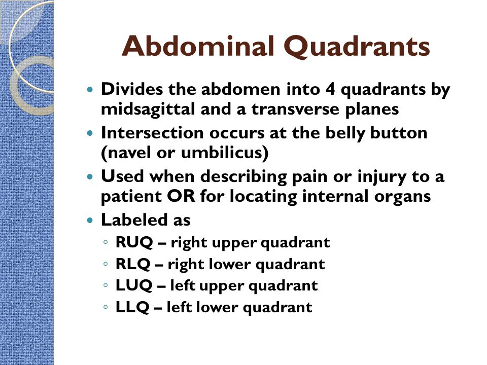 Intro to the human body directional terms planes quadrants abdominal quadrants divides the abdomen into 4 quadrants by midsagittal and a transverse planes ccuart Image collections