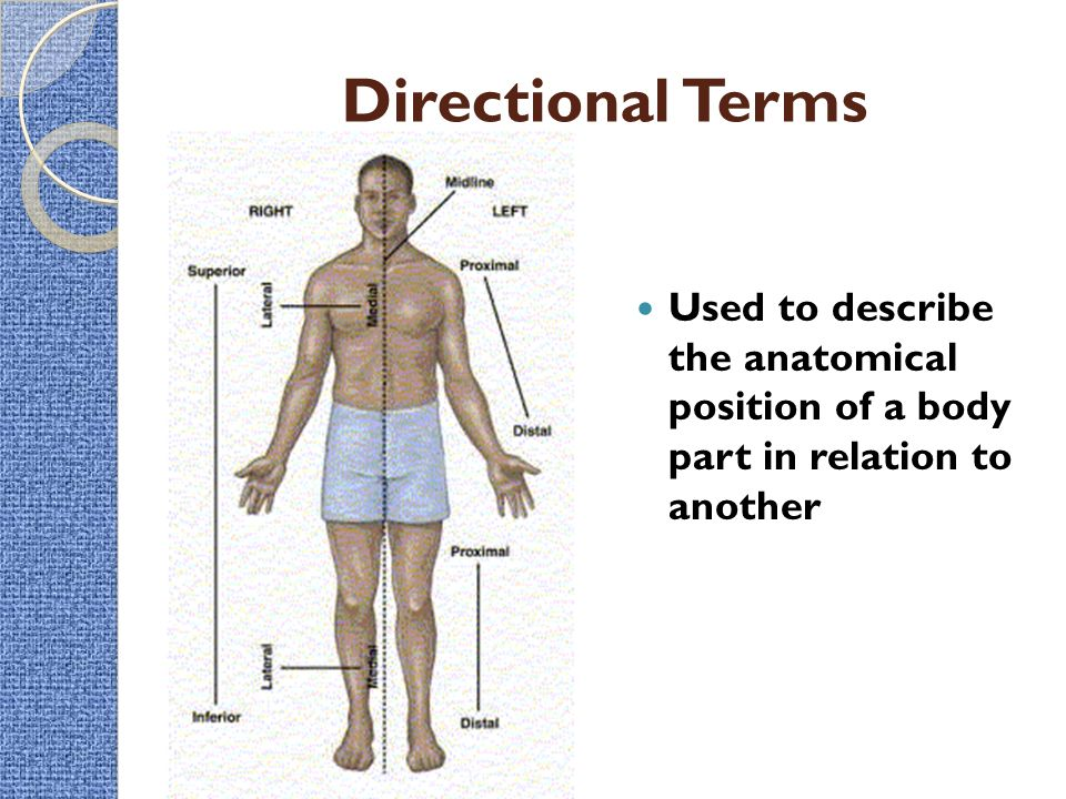 Intro to the Human Body – Directional Terms, Planes, Quadrants, and ...