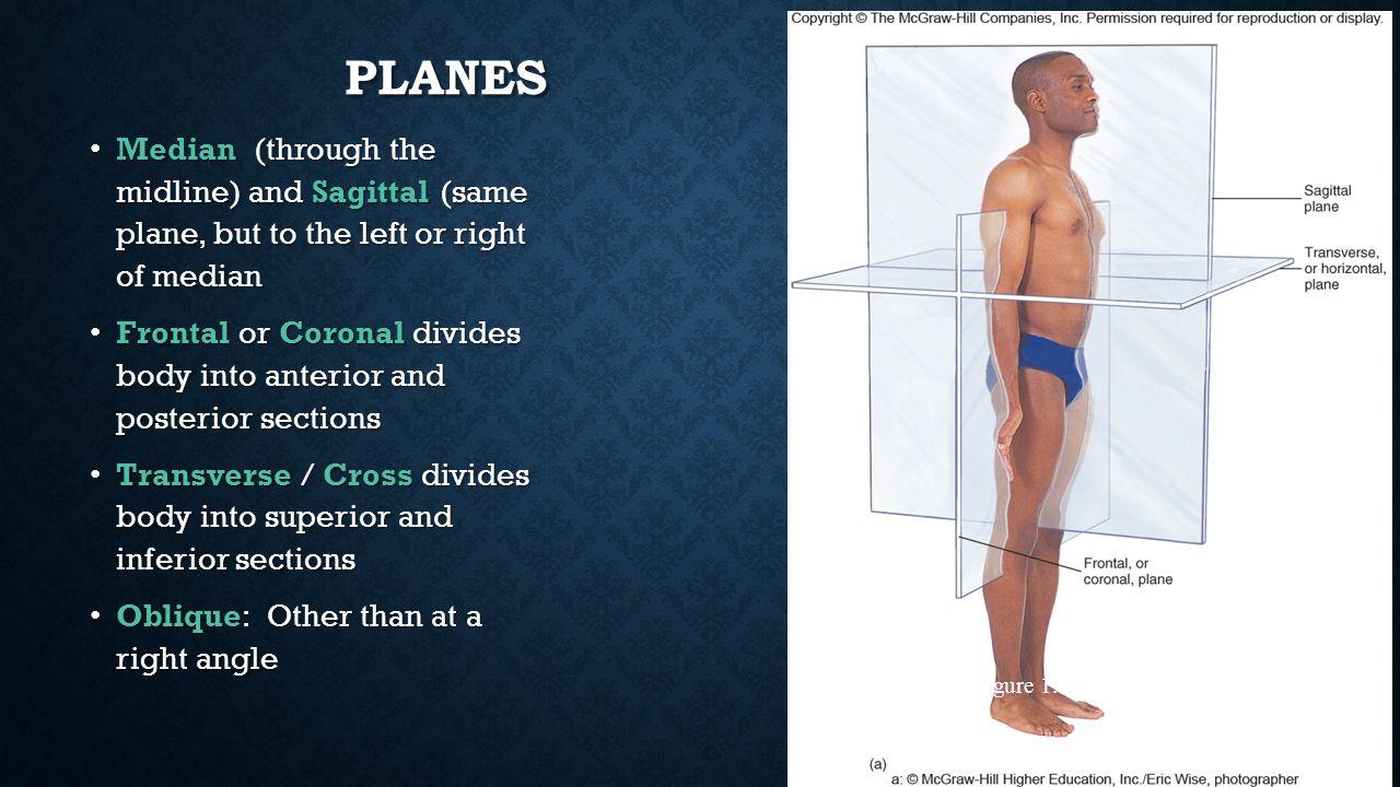 Sagittal plane definition anatomy 8118331 - follow4more.info