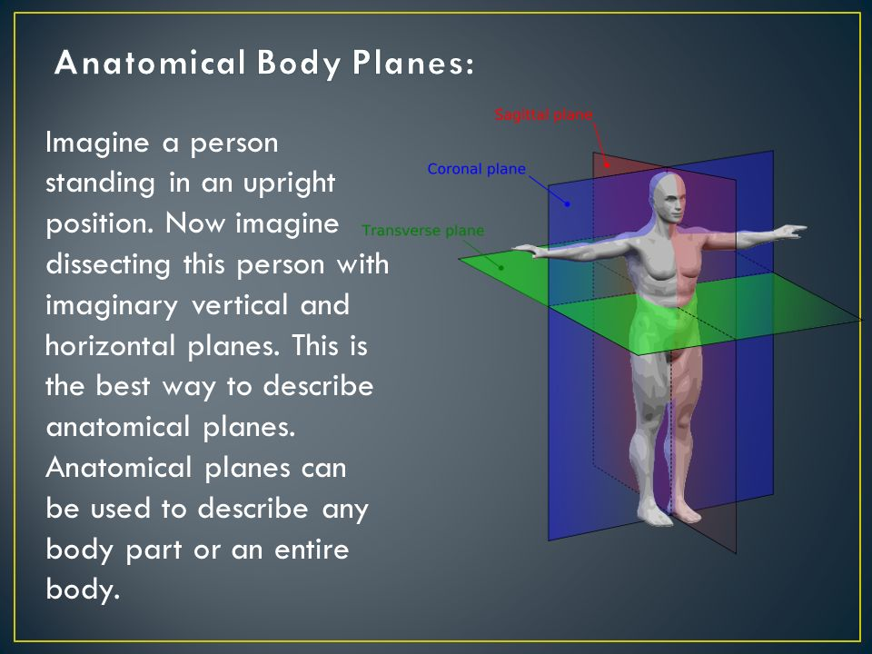 Anatomical Body Planes: