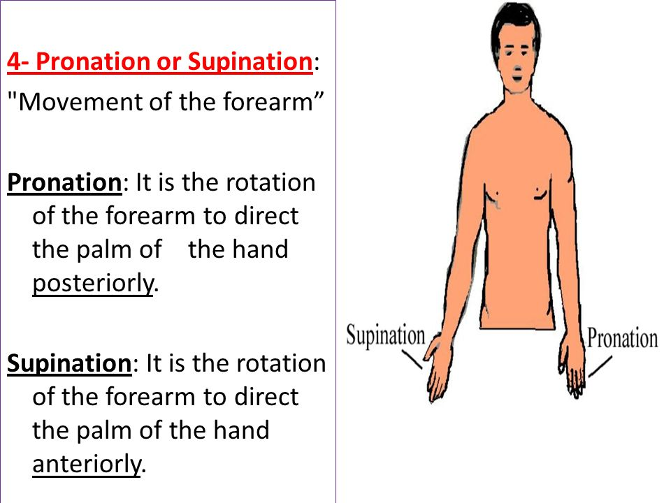 4- Pronation or Supination: Movement of the forearm Pronation: It is the rotation of the forearm to direct the palm of the hand posteriorly.