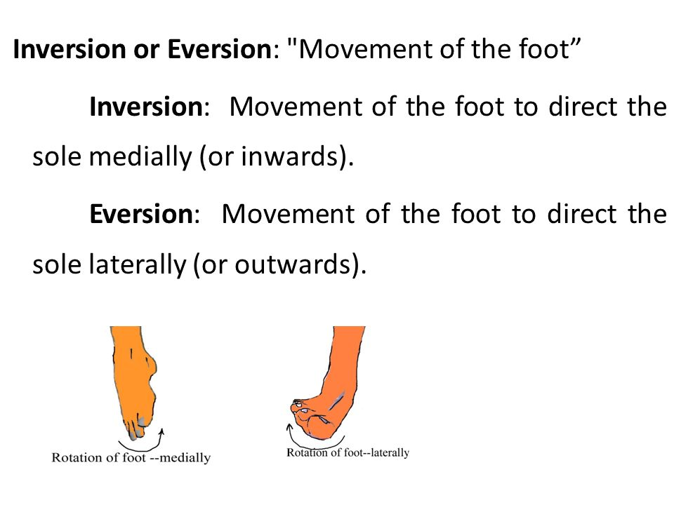 Inversion or Eversion: Movement of the foot