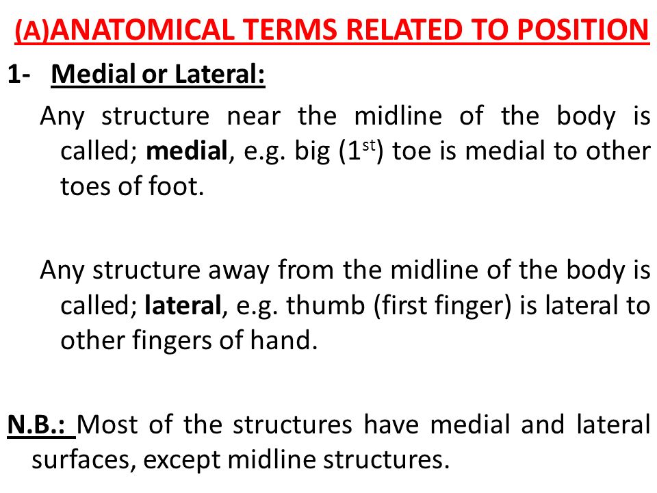 (A)ANATOMICAL TERMS RELATED TO POSITION 1- Medial or Lateral: Any structure near the midline of the body is called; medial, e.g.