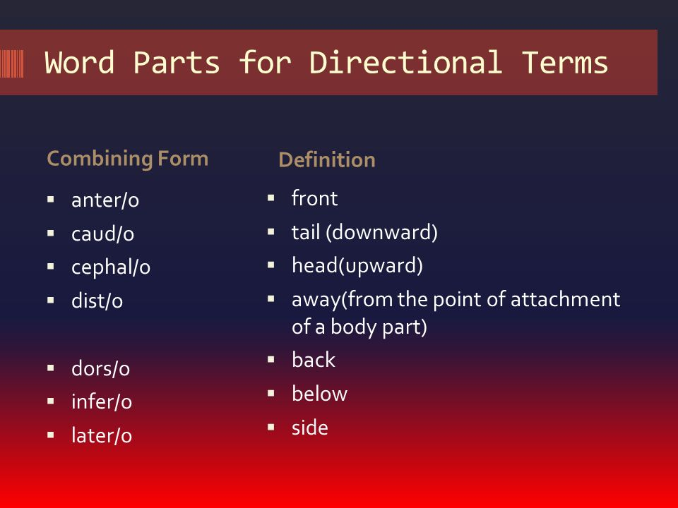 medical terms and definitions pdf