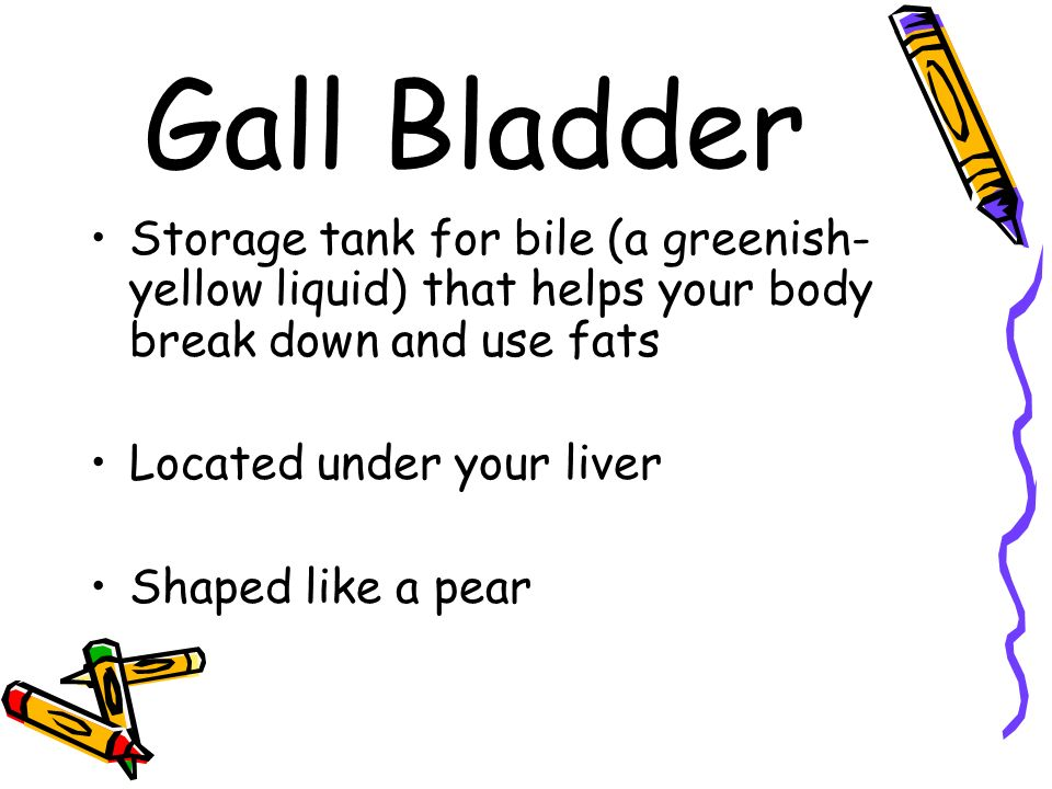 Gall Bladder Storage tank for bile (a greenish-yellow liquid) that helps your body break down and use fats.