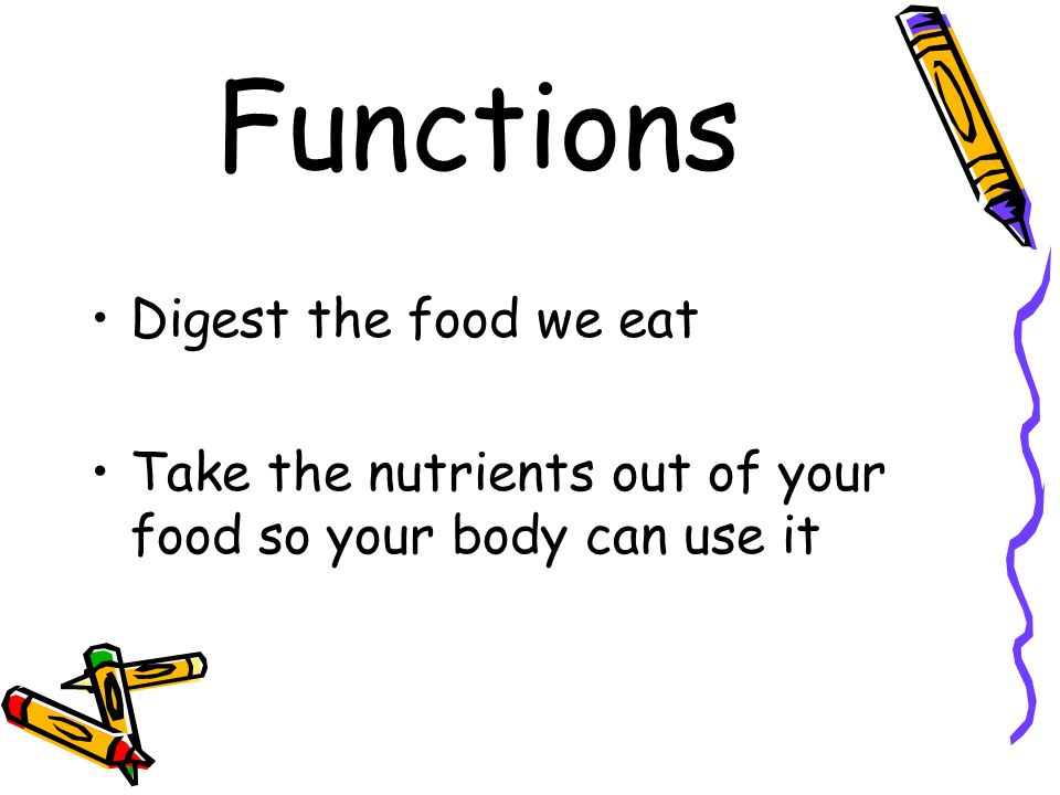Functions Digest the food we eat