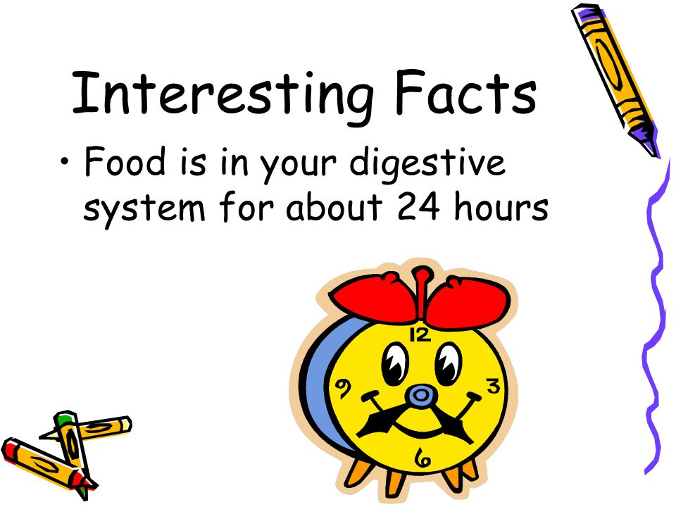 Interesting Facts Food is in your digestive system for about 24 hours