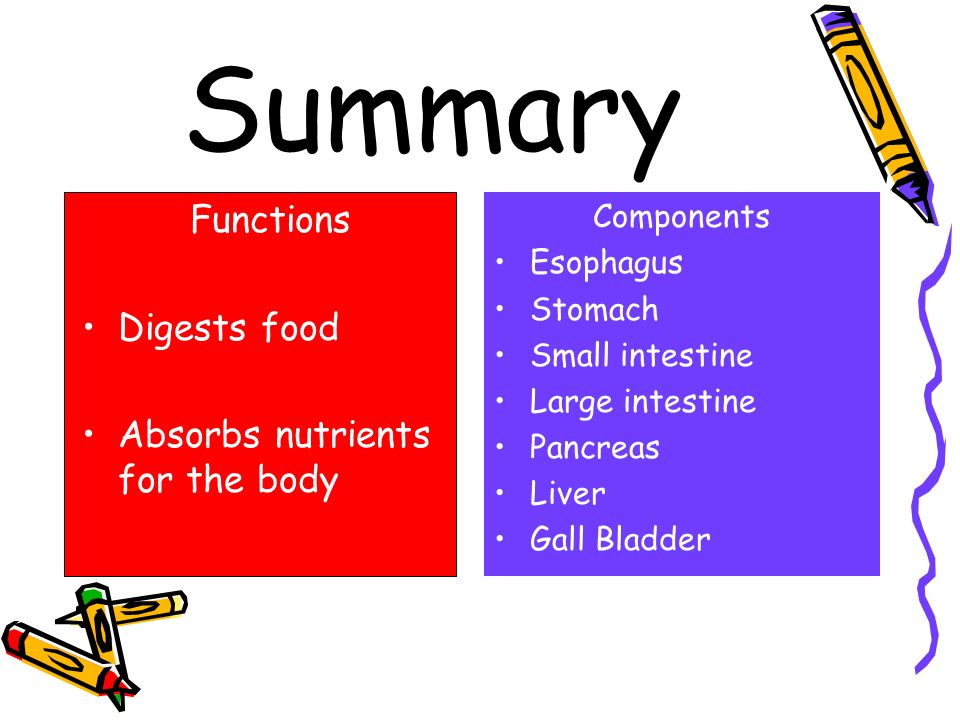 Summary Functions Digests food Absorbs nutrients for the body